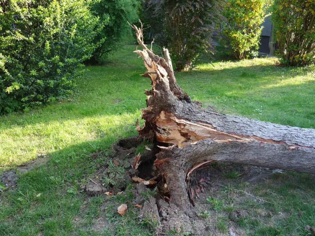עצים הפוכים