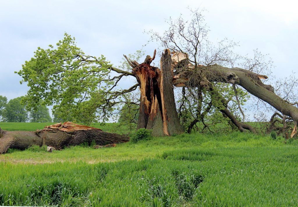 עצים רקובים